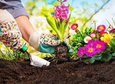 Bahçıvanlık İşleri